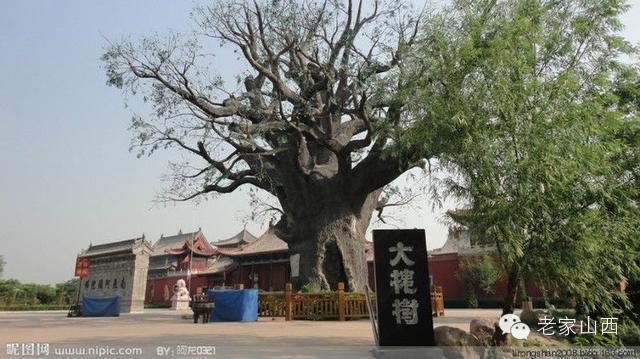 中国家谱文化,中国姓氏文化