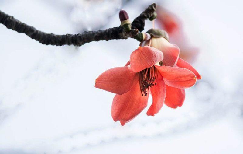 20199春季姚商家宴会与木棉花读书会,23日(周六)与您相约东莞虎英公园